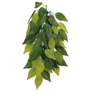 Planta Colgante Seda, Ficus