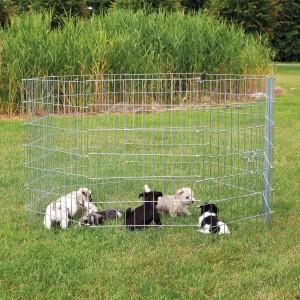 Recinto Cachorros natura