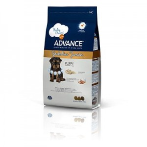 Advance Yorkshire Terrier Junior